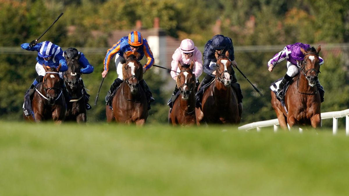 Qipco champion stakes betting line football game betting