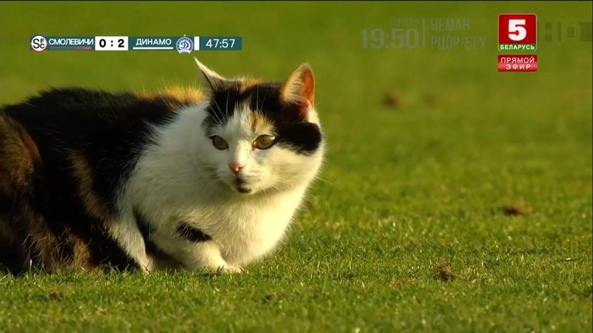 Кот на матче чемпионата Белоруссии