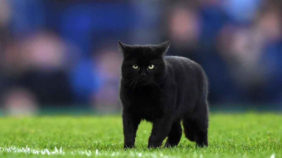 Un chat noir a interrompu le match à Everton
