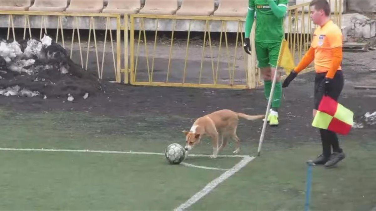 Собака на футбольном матче в Украине