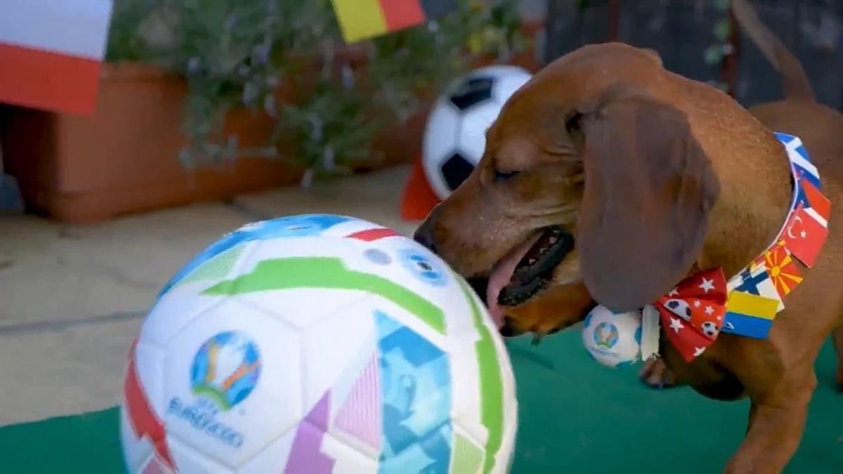 Cățelul 'prezicător' de la Euro 2020
