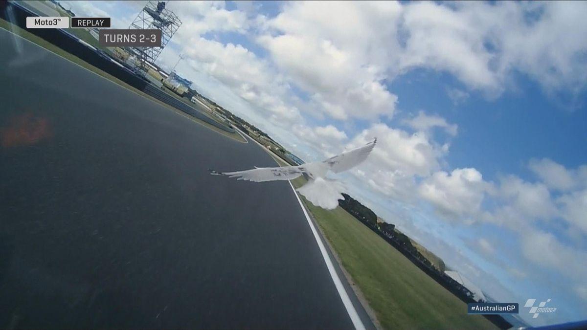 Australian GP - Moto3 - FP2 Bezzechi vs bird