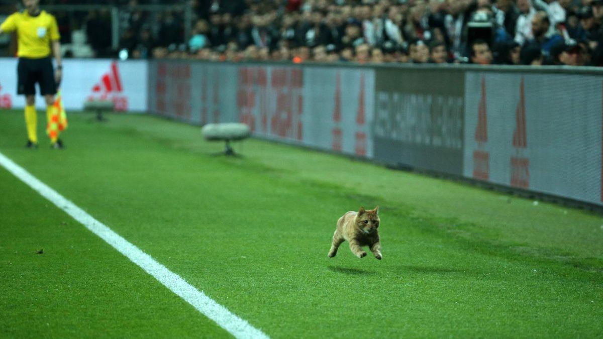 Katze im Stadion: Besiktas Istanbul droht Strafe