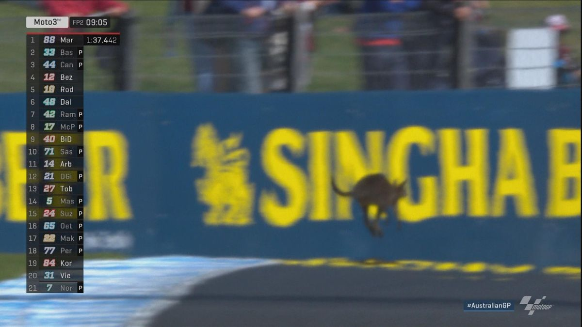 Australian GP - Moto3 - FP2 Insolite - Wallaby on track