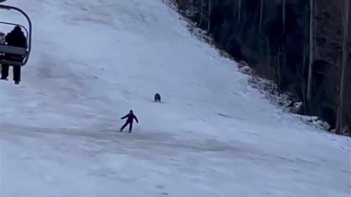 Медведь преследует горнолыжника