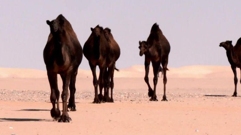 Explore Saudi Arabia's 'Empty Quarter'