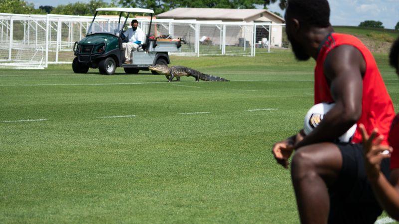 ¡Un aligátor en el entrenamiento! Susto y sorpresa para los jugadores del Toronto
