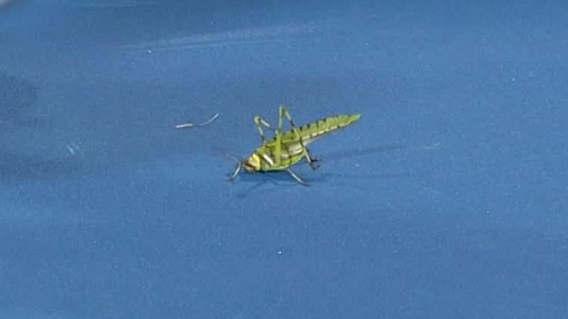 Insect on the court during Millman v Simon!
