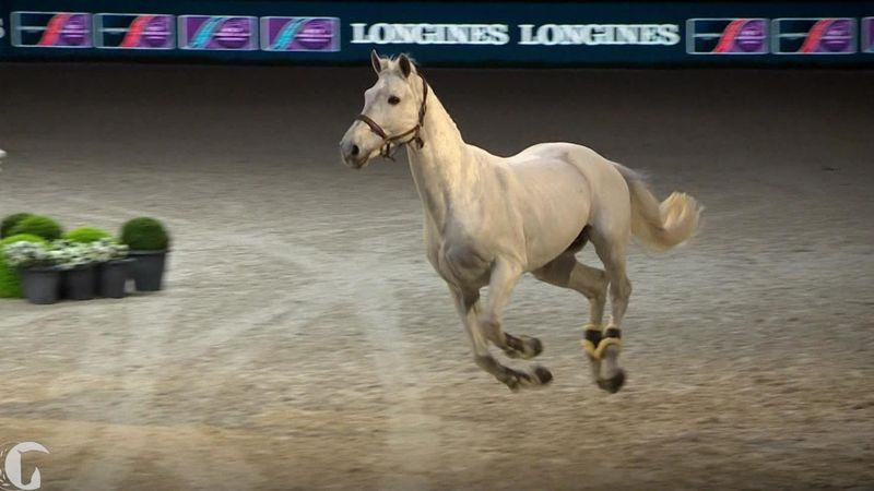 Las emotivas (y contagiosas) lágrimas de Dinizsobre su caballo Winningmood en su última prueba