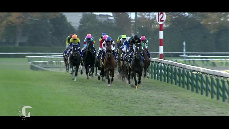 Horse Excellence : Racing - Japan Cup