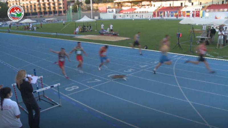 Cat sprints across finish line during 100m race in Turkey