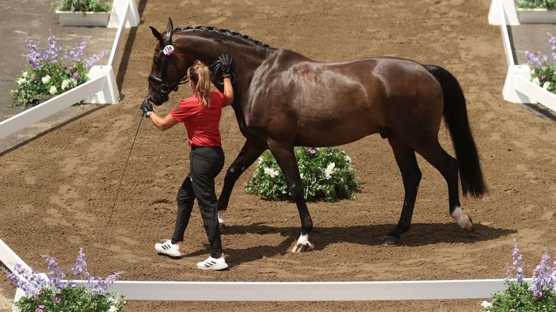"""""""Wichtiger als die Reiter"""": So läuft die Horse Inspection"""