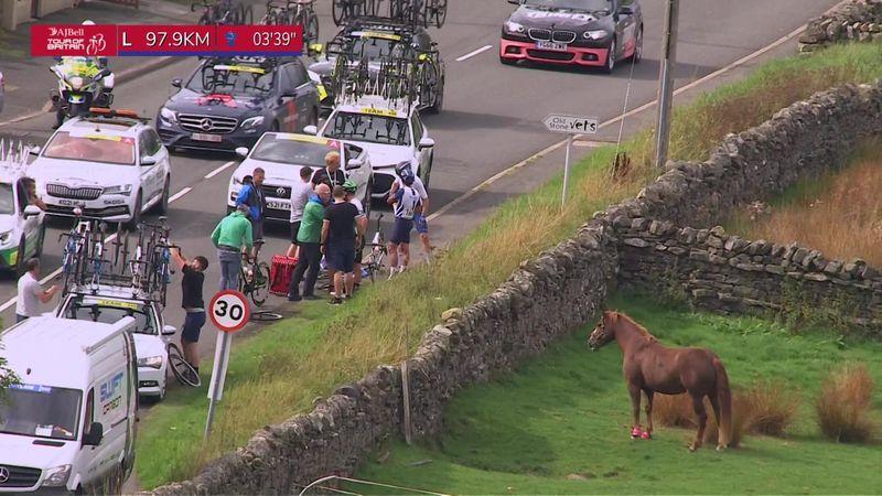 Гонщики Тура Британии развлекли лошадь небольшим завалом