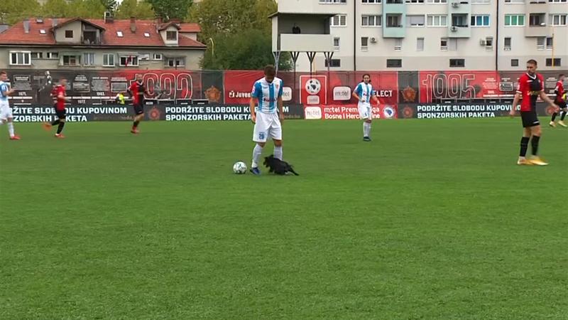No dejen perros sueltos en un campo de fútbol: así cortó este can un partido de la liga bosnia