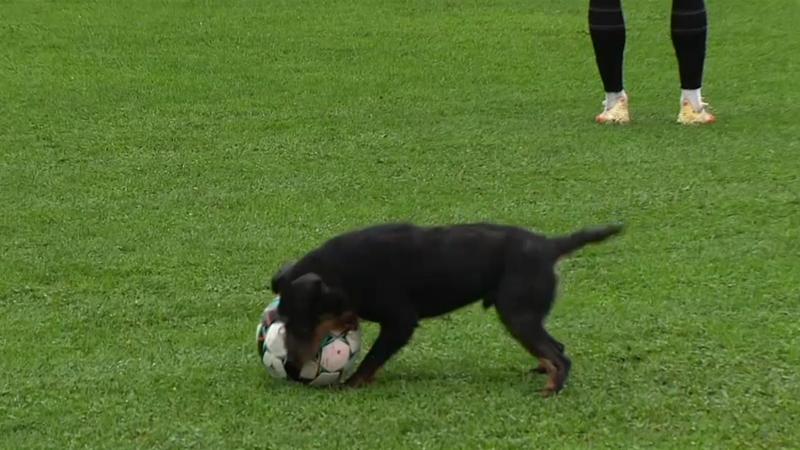Jack Growlish! - Dribbling dog stops play in Bosnia
