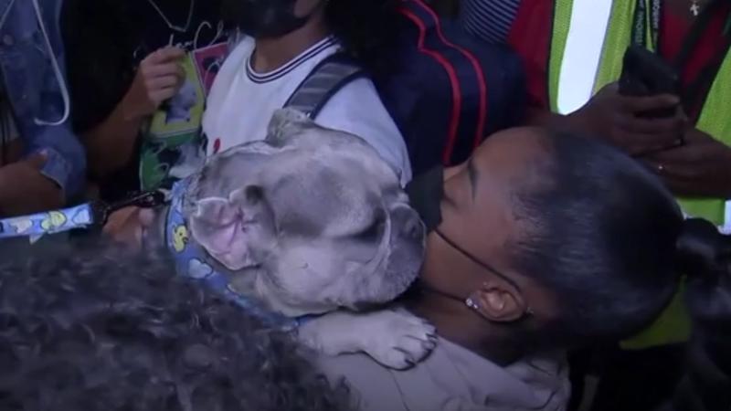 Байлз ярко встретили в США. Милый собакен лизнул гимнастку в щеку
